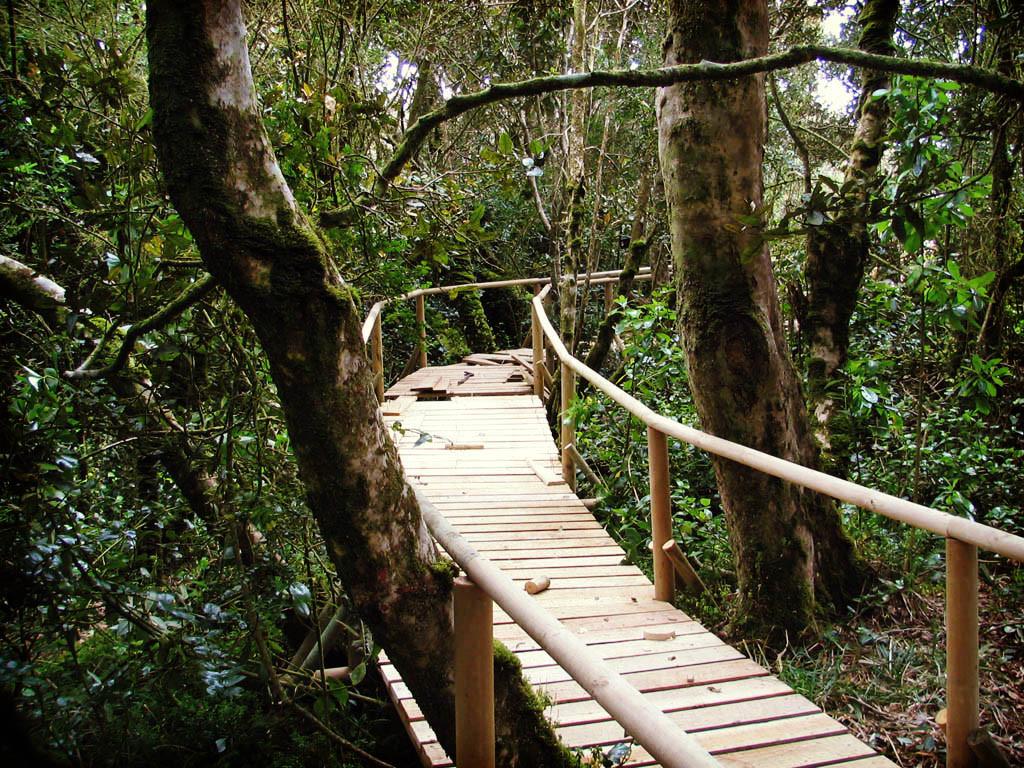 El Parque Fray Jorge es una excelente alternativa para conocer el hábitat de cientos de especies de flora y fauna, cualquier fin de semana largo.