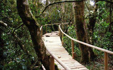Parque Nacional Fray Jorge Valle del Limari