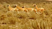 Parque Nacional Llanos de Challe Atacama