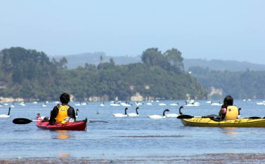60 Kayak entre Cisnes Budi_04