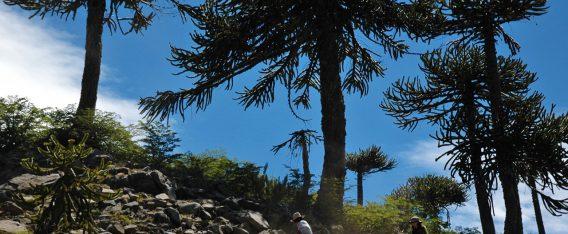 Alto Biobío: 6 mejores lugares para ver el otoño en Chile