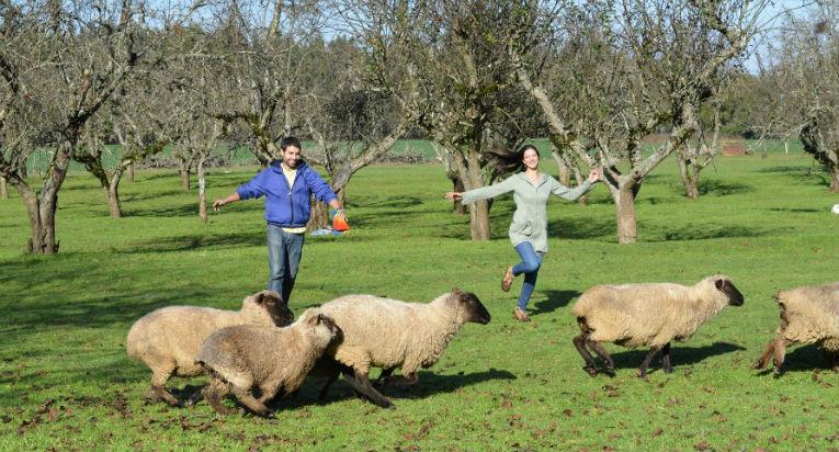 dacfa5e595b6a Bitácora presenta la mejor oferta de Turismo Rural de Chile - Chile ...