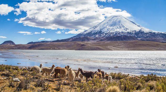 Parque Nacional Lauca: 6 mejores lugares para ver el otoño en Chile