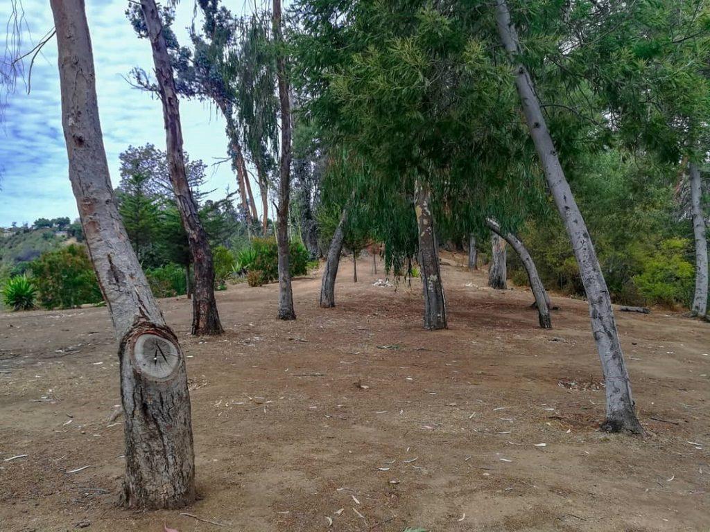 Quinta Vergara, un lugar para hacer senderismo con perros.