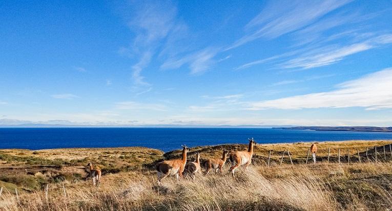 La fauna de la Isla de Tierra del Fuego te encantará.