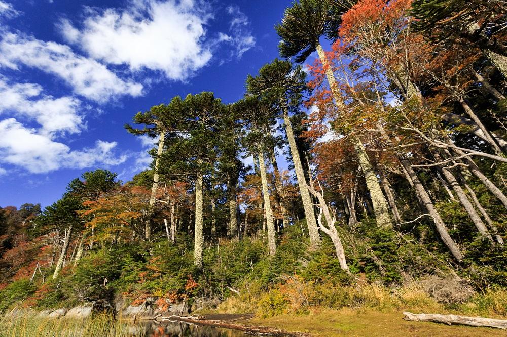 Paisaje del Parque Nacional Huerquehue, Chile es el mejor destino de turismo aventura del mundo