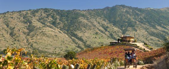 Valle de Colchagua y fiestas de la Vendimia en Chile