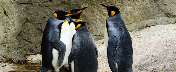 Parque Pingüino Rey es un viaje por la Patagonia imposible de olvidar