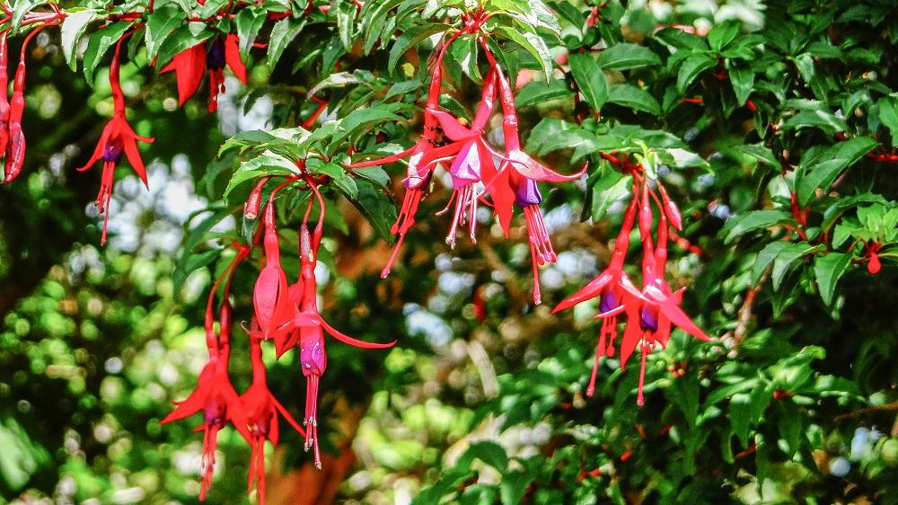 Flora que encontrarás en una excursión al Parque Nacional Chiloé