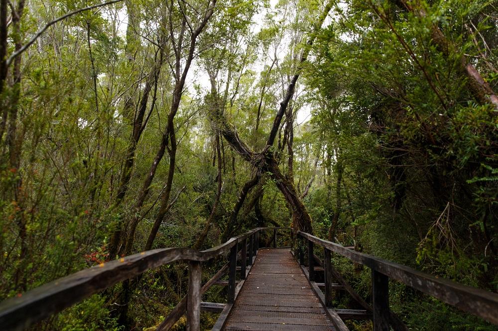 Excursión al Parque Nacional Chiloé y senderos