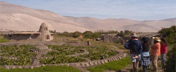 Valle de Lluta es un imperdibles de Arica y Parinacota