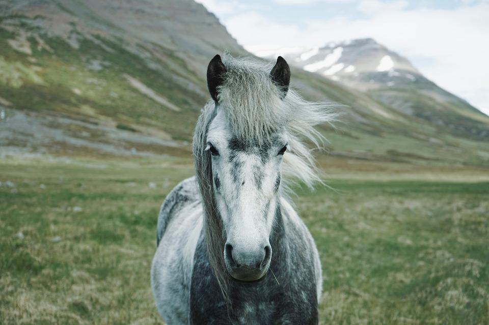 Cabalgatas y turismo en Los Andes de O´Higgins
