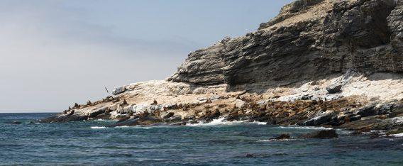 ¿Qué hacer en Atacama? Visita Chañaral de Aceituno para ver ballenas