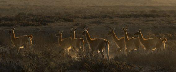¿Qué hacer en Atacama? Flora y fauna nativa