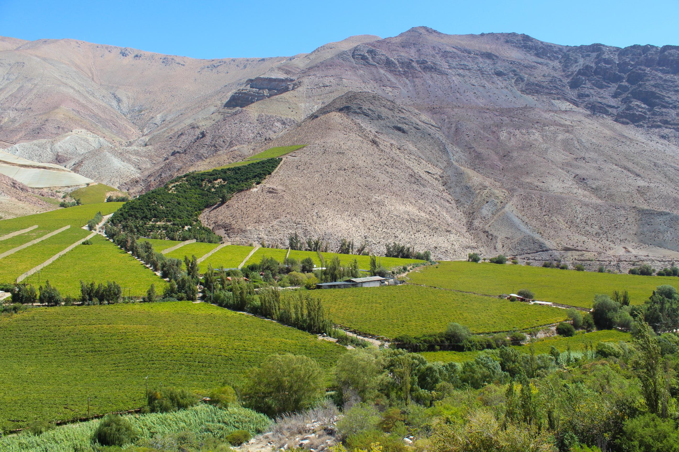3 días en el Valle de Elqui y sus paisajes cargados de viñedos