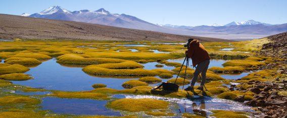 ¿Qué hacer en Atacama? Visitar Ojos del Salado