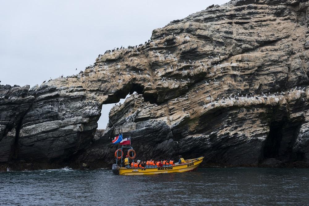 avistamiento de aves desde un bote en Chañaral de Aceituno