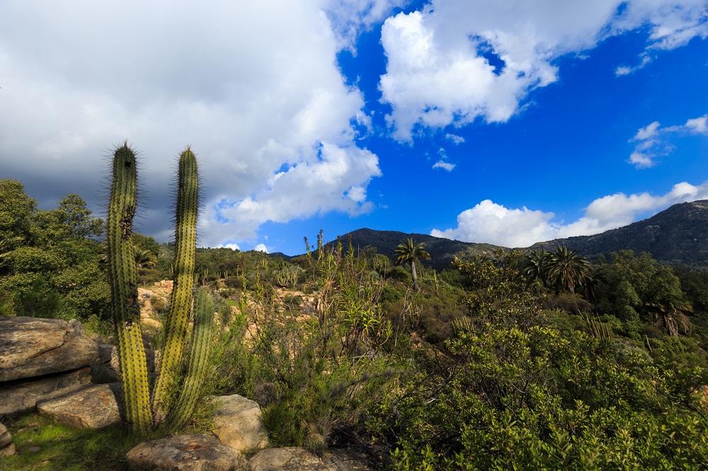 Flora local en la Reserva de la Biosfera La Campana