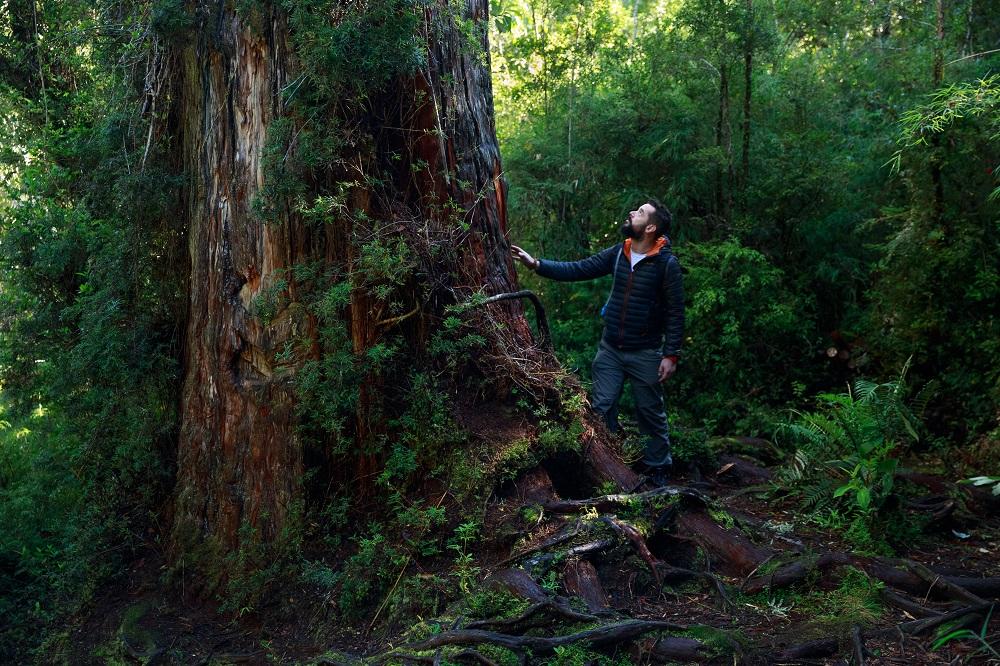 Verdes bosques en el Parque Nacional Alerce Andino parte de la Reserva de la Biósfera de los Bosques Templados Lluviosos de los Andes Australes