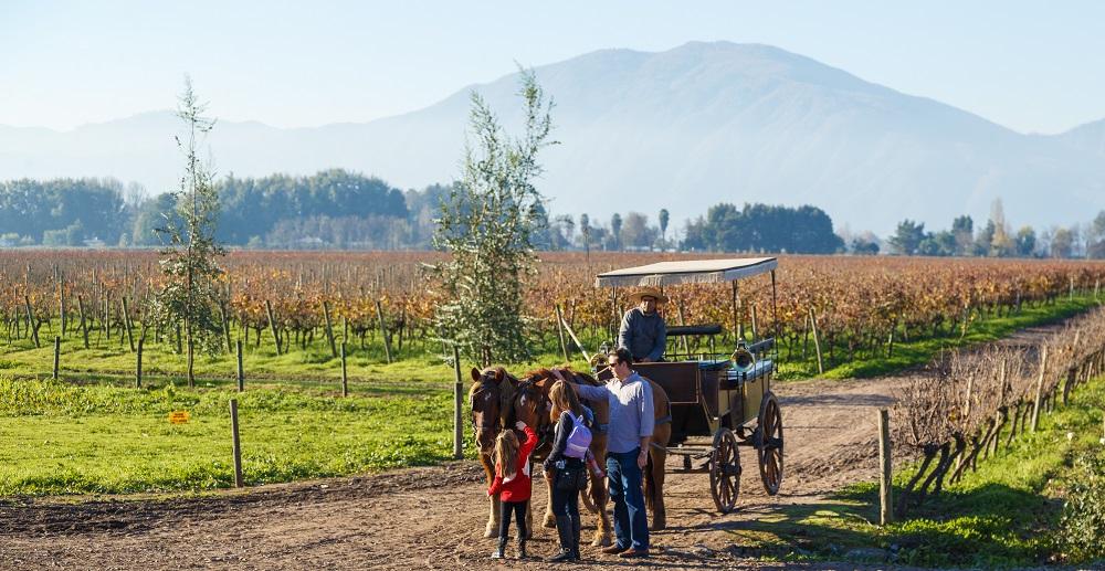 Experiencia del vino en La Región del Libertador Bernardo O'higgins