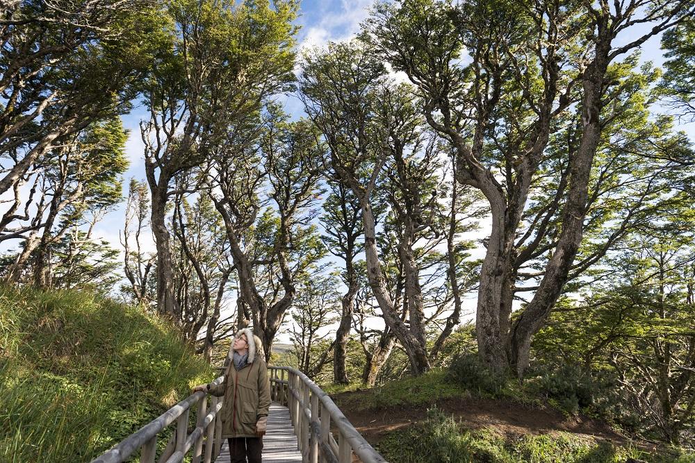 Los bosques de la Reserva de la Biósfera Cabo de Hornos
