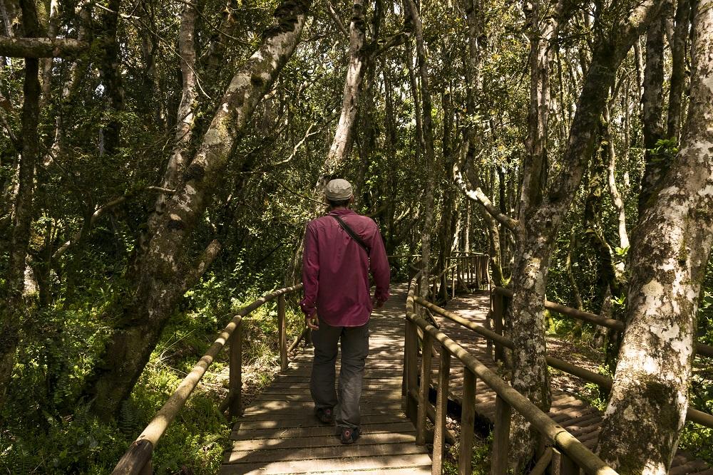 Sendero que lleva a verdes paisajes dentro de la Reserva Nacional Fray Jorge