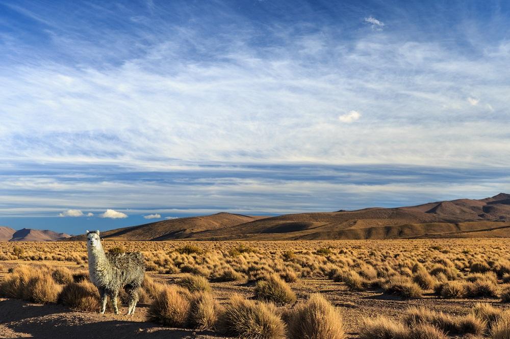 4 días en Iquique y el Parque Nacional Volcan Isluga