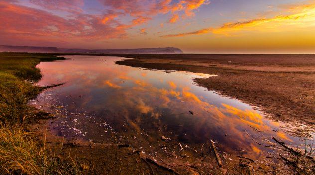 Imagen Humedal de la desembocadura del río Lluta