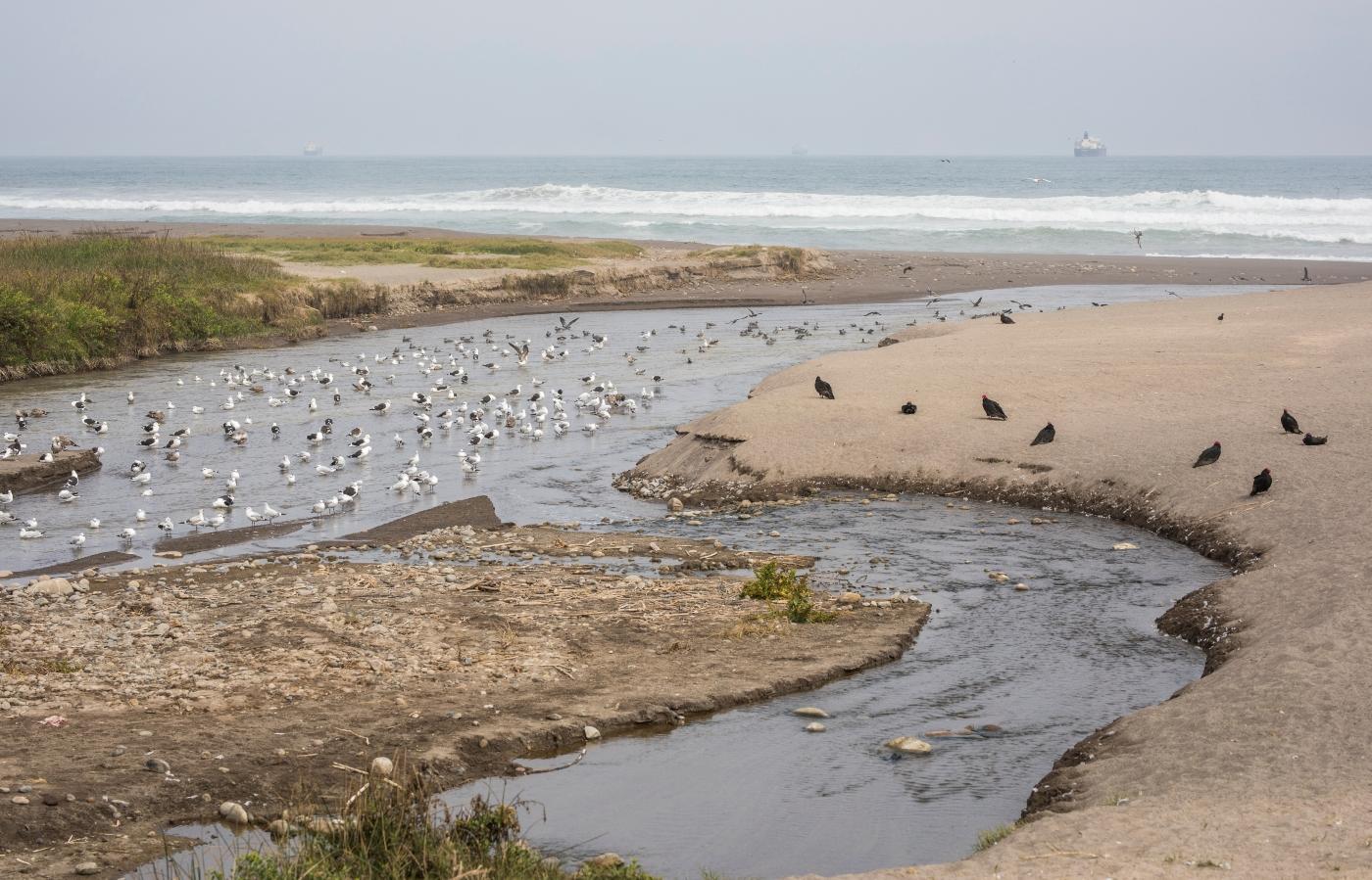 Imagen de Humedal de la desembocadura del río Lluta