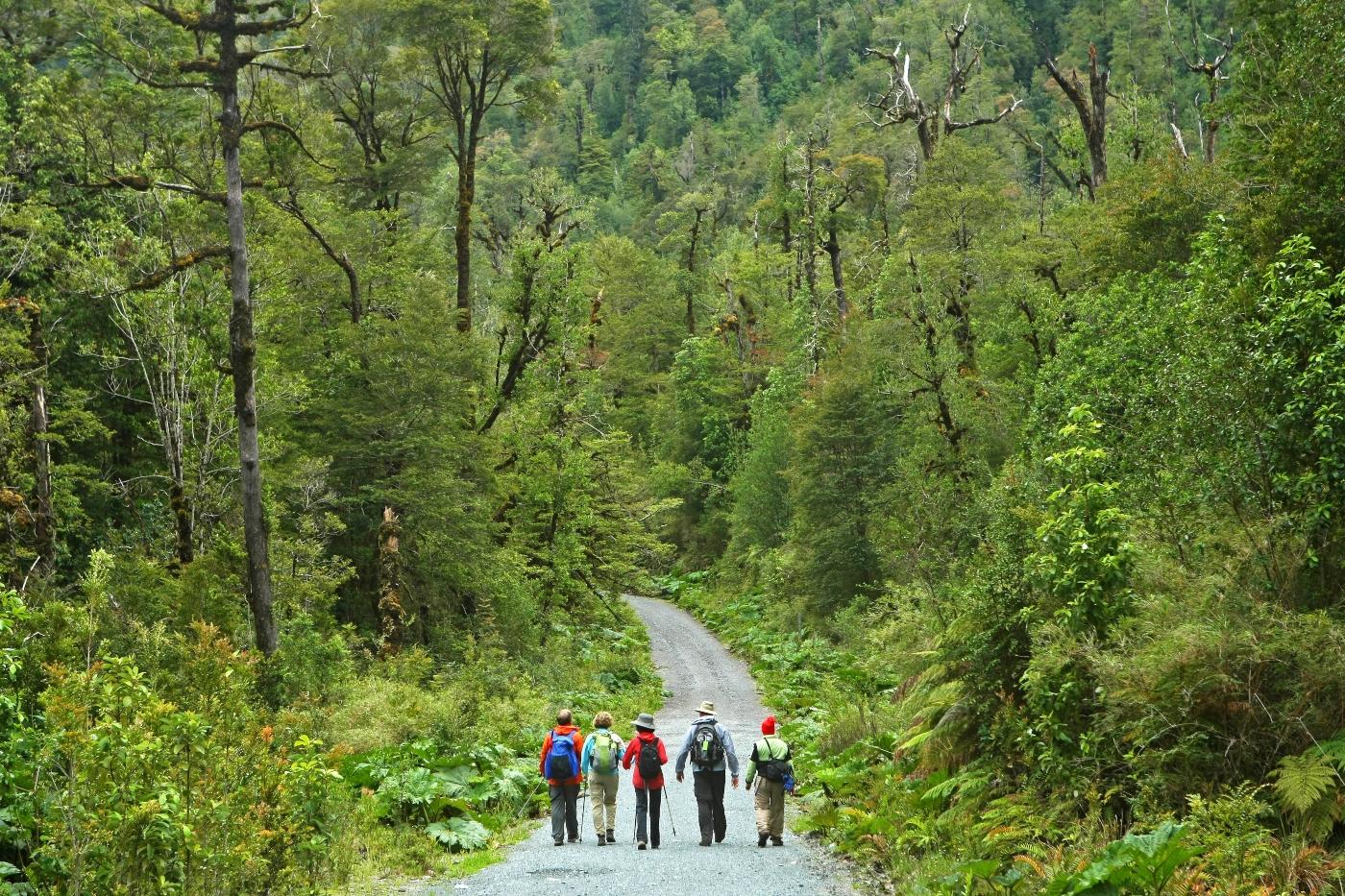 Imagen del Parque Nacional Alerce Andino