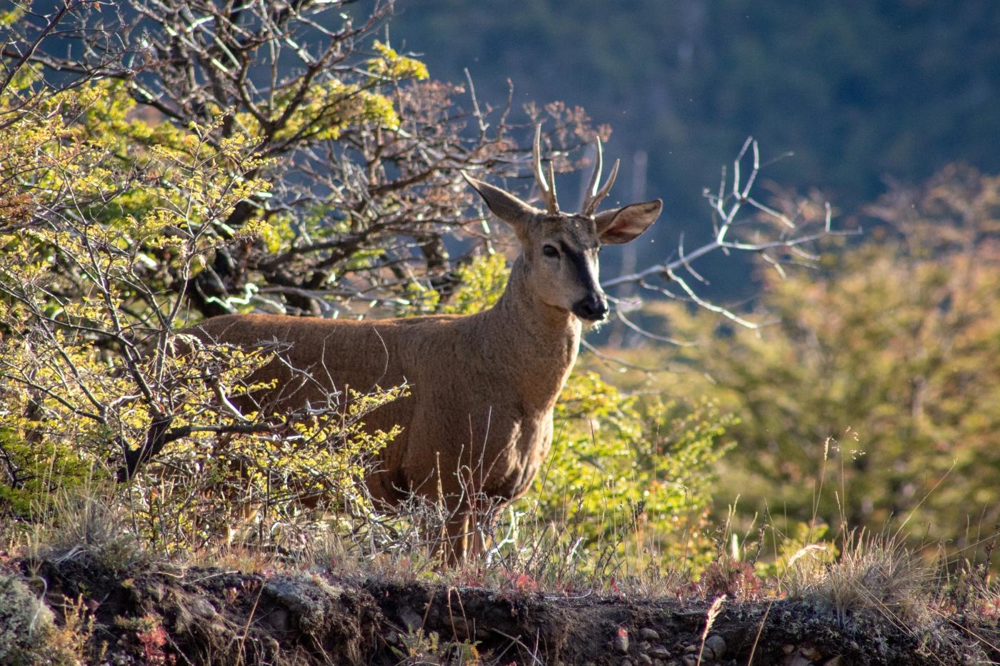 Imagen del Parque Nacional Patagonia