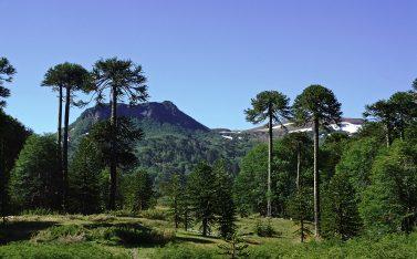 Imagen de la Reserva Nacional Ralco