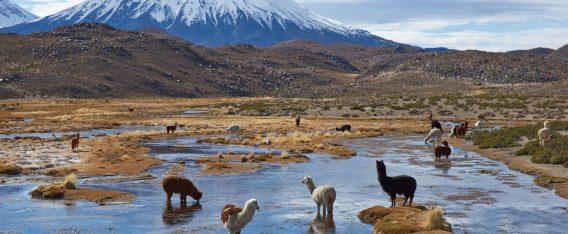 Imagen del Bofedal Parinacota