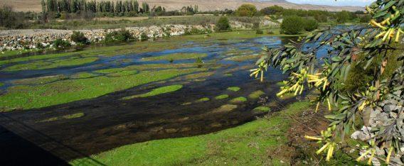Imagen del Humedal Huasco Bajo