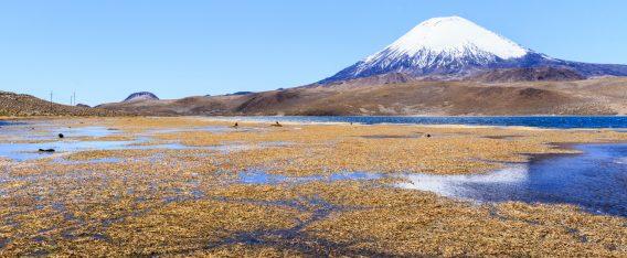 Imagen del Lago Chungará