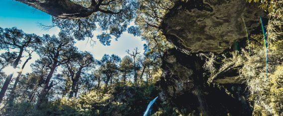 Imagen del Parque Nacional Tolhuaca