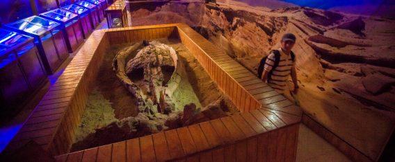 Imagen de la Sala Museográfica Paleontológica
