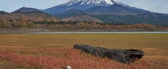Imagen del volcán Llaima