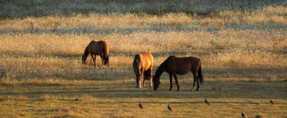 Imagen del Parque Ecológico Reussland