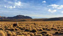 Parque-Nacional-Volcán-Isluga