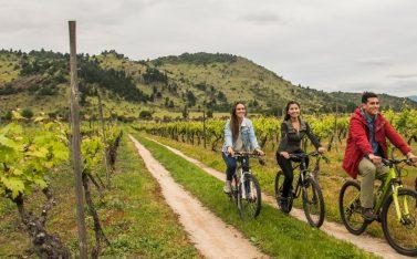 Imagen de un grupo de amigos pedaleando en una viña chilena