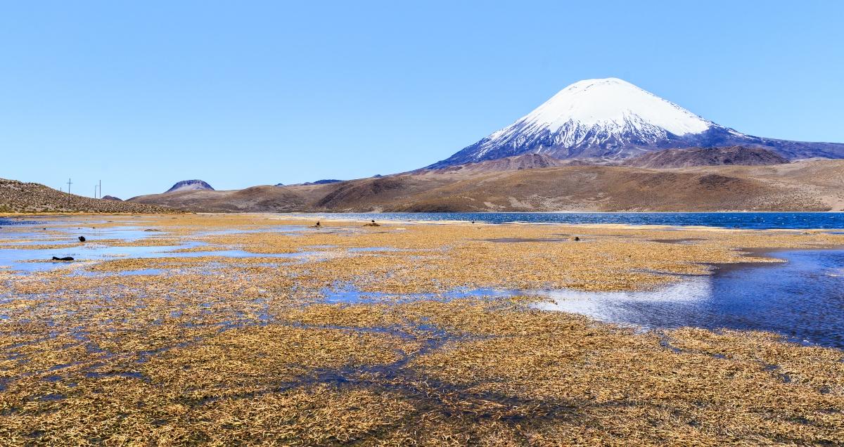 Imagen del Lago Chungará en un día despejado donde se puede apreciar el contraste del desierto con sus azules aguas