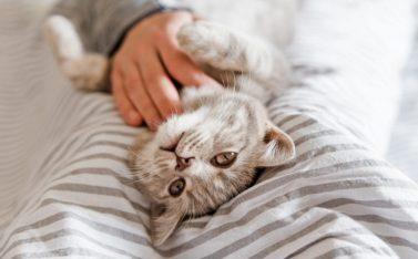 Imagen de un gato en casa