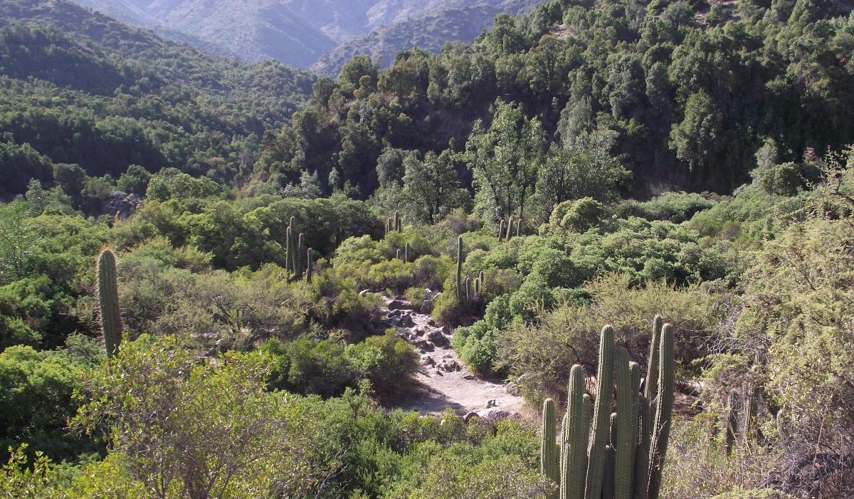 Imagen de la vegetación del Parque Nacional Río Clarillo