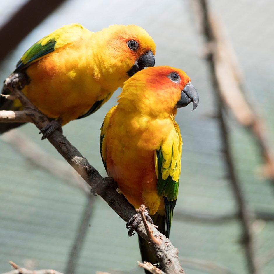 Aviario - coloridas aves de Tricao