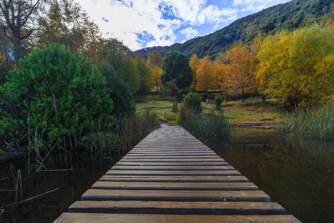 Bosques de Chile-imagen de un verde parque nacional