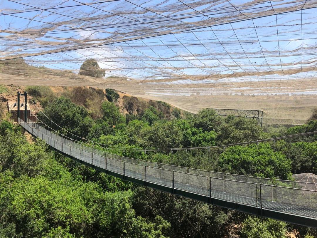 Aviario - puente colgante del parque Tricao