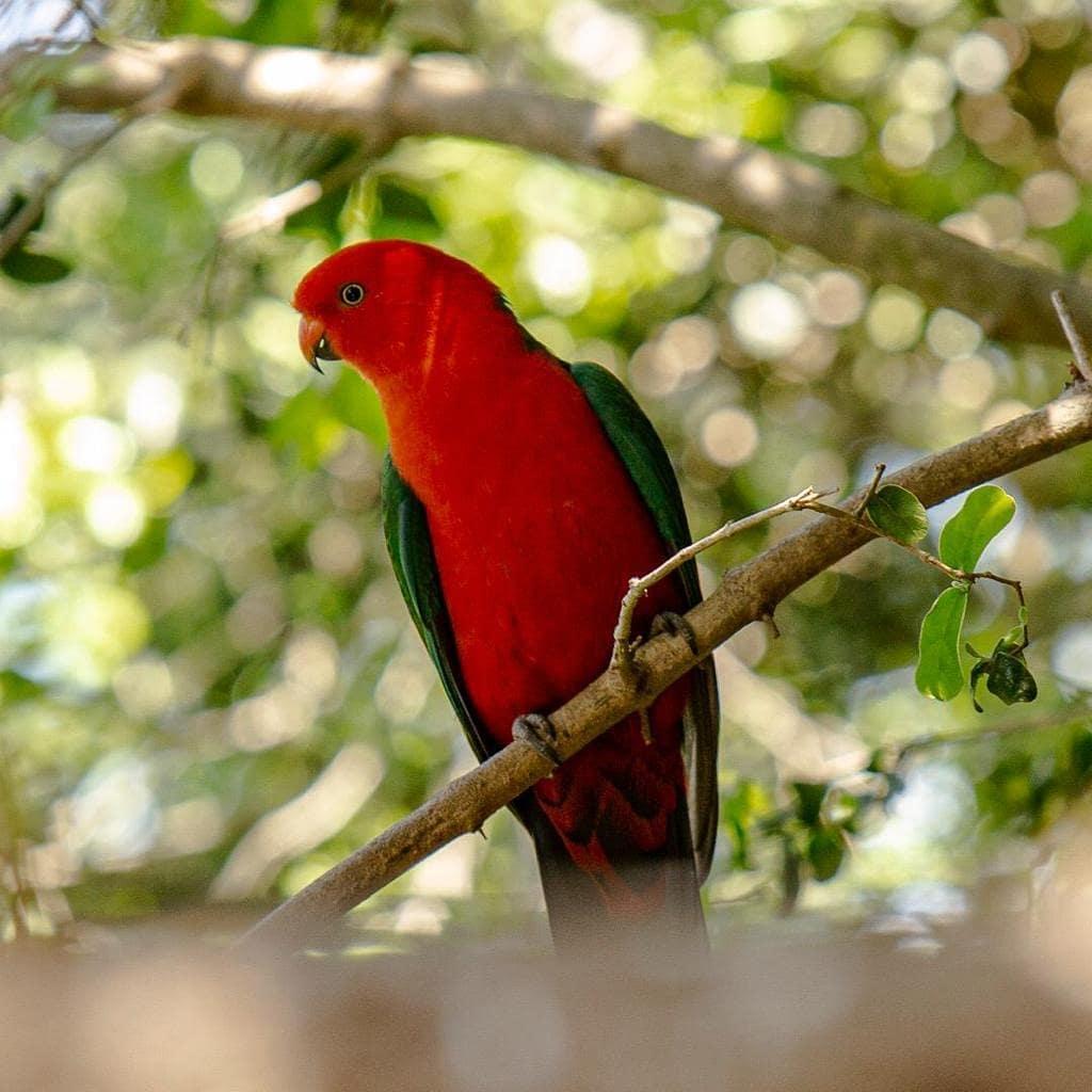 Aviario- imagen de las coloridas aves del parque Tricao