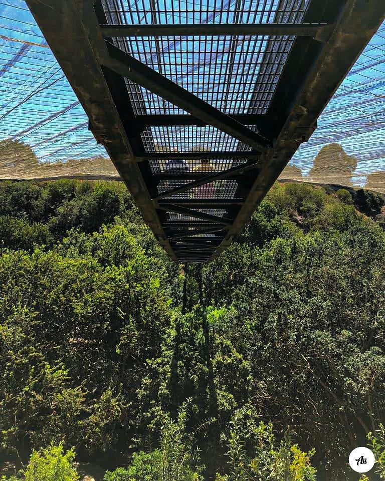 Aviario- imagen del puente colgante del parque Tricao