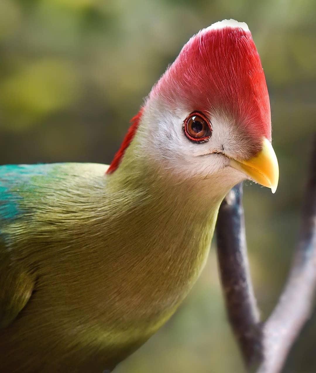 Aviario - colorida imagen de una de las aves del parque Tricao